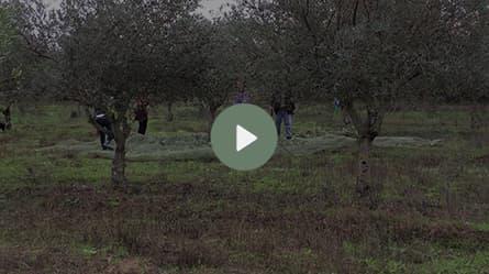 ecran-video-1.jpg